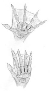 cytith-hands